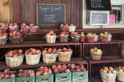 Saunders Brothers Orchard and Farm Market