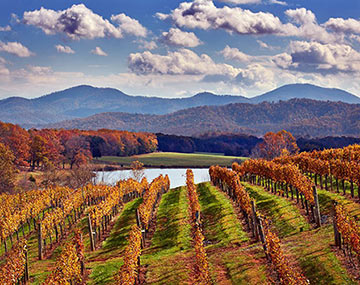 Afton-Mountain-Vineyards