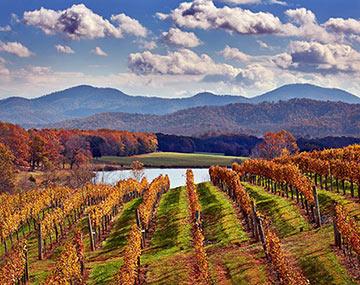 Afton-Mountain-Vineyards