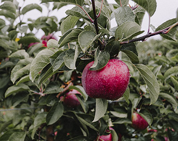 Silver-Creek-Orchards