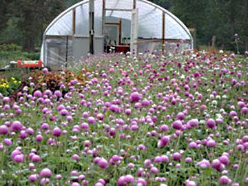 fairweather-farm