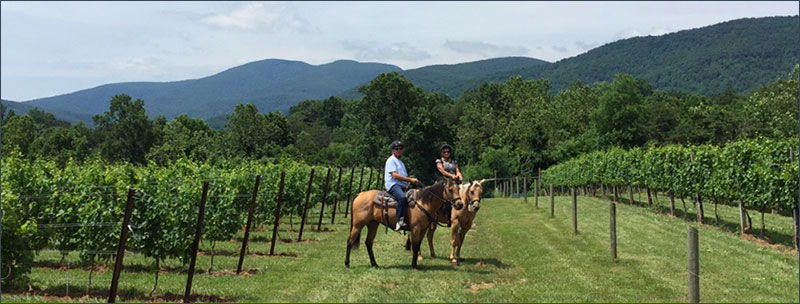 Vineyard-Trail-Rides