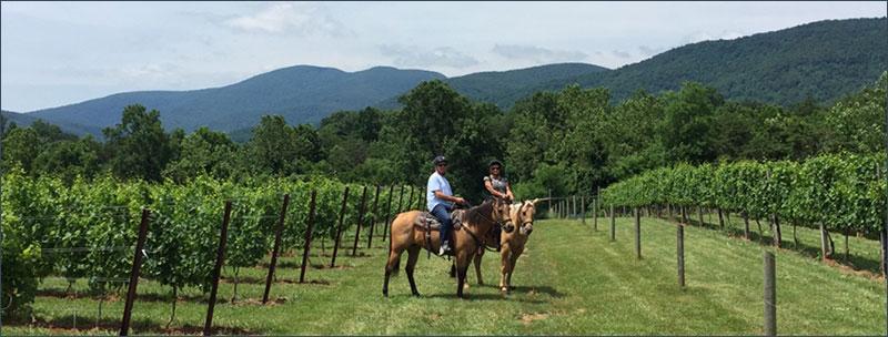 Vineyard-Trail-Rides