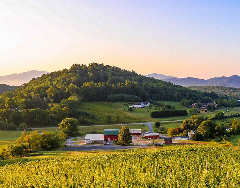 Valley-Road-Vineyards