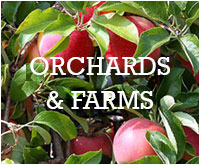 Orchards and Farms in Nelson County