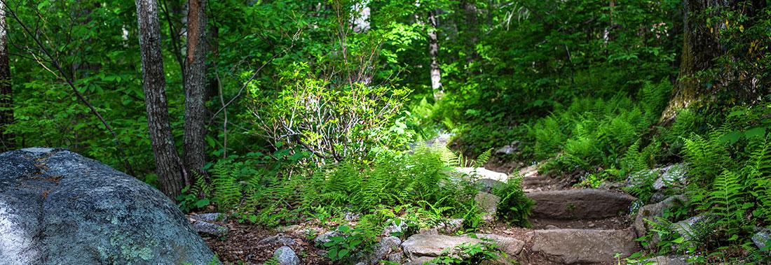 Blue Ridge Parkway hiking